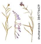 set of wild dry pressed flowers ... | Shutterstock . vector #384776629
