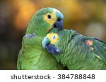 Small photo of Portrait of two Amazon Parrots