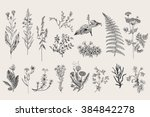 Stock vector herbs and wild flowers botany set vintage flowers black and white illustration in the style of 384842278