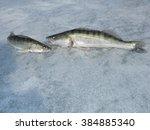 zander | Shutterstock . vector #384885340