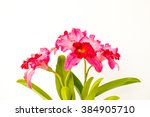 beautiful flower on white... | Shutterstock . vector #384905710