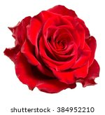 Rose flower isolated on white...