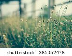 flower and space for background ... | Shutterstock . vector #385052428
