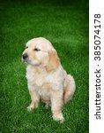 cute golden retriever puppy... | Shutterstock . vector #385074178
