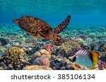 colorful coral reef with many... | Shutterstock . vector #385106134