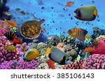 Colorful Coral Reef With Many...