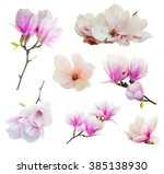set of fresh blooming  pink... | Shutterstock . vector #385138930