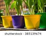 Colorful Brillient Flower Pots...