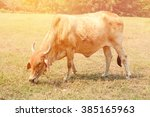 cow in the meadow.process in... | Shutterstock . vector #385165963
