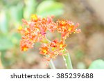 little orange flower with green ...   Shutterstock . vector #385239688