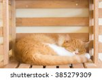 a sleepy cat was sleeping in... | Shutterstock . vector #385279309