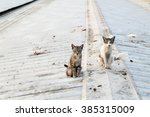 Two Young Cats Sitting On The...