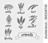vector illustration of ripe... | Shutterstock .eps vector #385328740