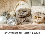 grumpy christmas cats with... | Shutterstock . vector #385411336