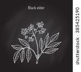 Elder  Elderberry  Black Elder...