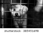 photo of an abandoned dog | Shutterstock . vector #385451698