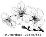 almond tropical flowers in... | Shutterstock . vector #385457566
