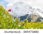 Mountain Flower Meadow In...