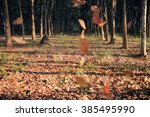 blurry of falling  leaves on... | Shutterstock . vector #385495990