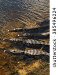 Small photo of Florida alligators in Everglades National Park