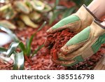 Mulching The Garden With Red...