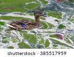 Environmental Protection  Duck...