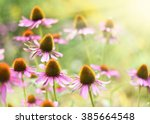 Red Coneflowers Or Purple...