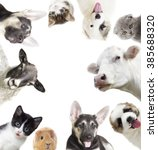 set of different animals | Shutterstock . vector #385688320