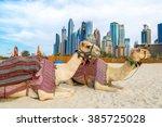 Camel In Front Of Dubai Marina...