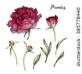 peonies and leaves  watercolor  ... | Shutterstock . vector #385778440
