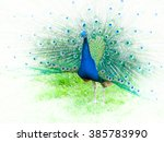 Portrait Of Peacock With Sprea...