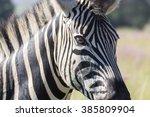 zebra | Shutterstock . vector #385809904
