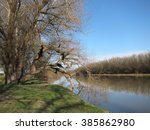 trees at the delta of danube... | Shutterstock . vector #385862980