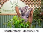 doonside  australia   november... | Shutterstock . vector #386029678