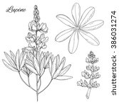 set of hand drawn inky lupine... | Shutterstock .eps vector #386031274