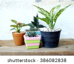 still life natural house plants ... | Shutterstock . vector #386082838