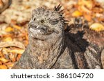 A Marine Iguana Warms Up In Th...