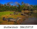 caiman  yacare caiman ... | Shutterstock . vector #386153719