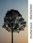 Small photo of Silhouette pic of a tree landscape at dusk