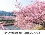 sakura tree and river | Shutterstock . vector #386207716
