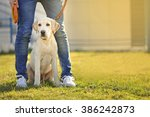 Stock photo owner and labrador dog sitting on green grass 386242873