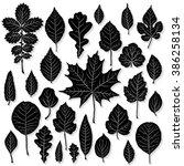 vector set of leaves silhouette  | Shutterstock .eps vector #386258134
