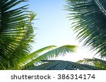palm sunday concept  leaves... | Shutterstock . vector #386314174