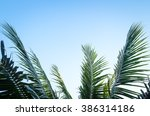 Palm Sunday Concept  Leaves...