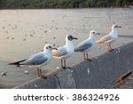 Seagulls Stand Wait Food