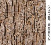 Old Maple Tree Bark Seamless...