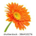 beautiful orange gerbera flower ... | Shutterstock . vector #386410276
