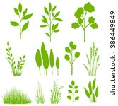 Vector Set Of Plants  Leaves ...