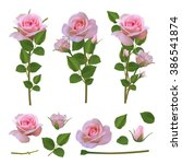 Stock vector collection of pink roses bushes and leaves for bouquets 386541874