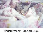 Stock photo cat sleeping in the pink floral blanket selective focus and vintage photo 386583853